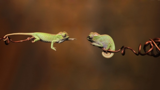 Tiny-Chameleons-Reaching-Out-1024x576-wallpaperz.co